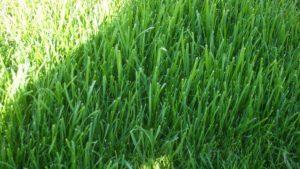 Fast Grass LLC.